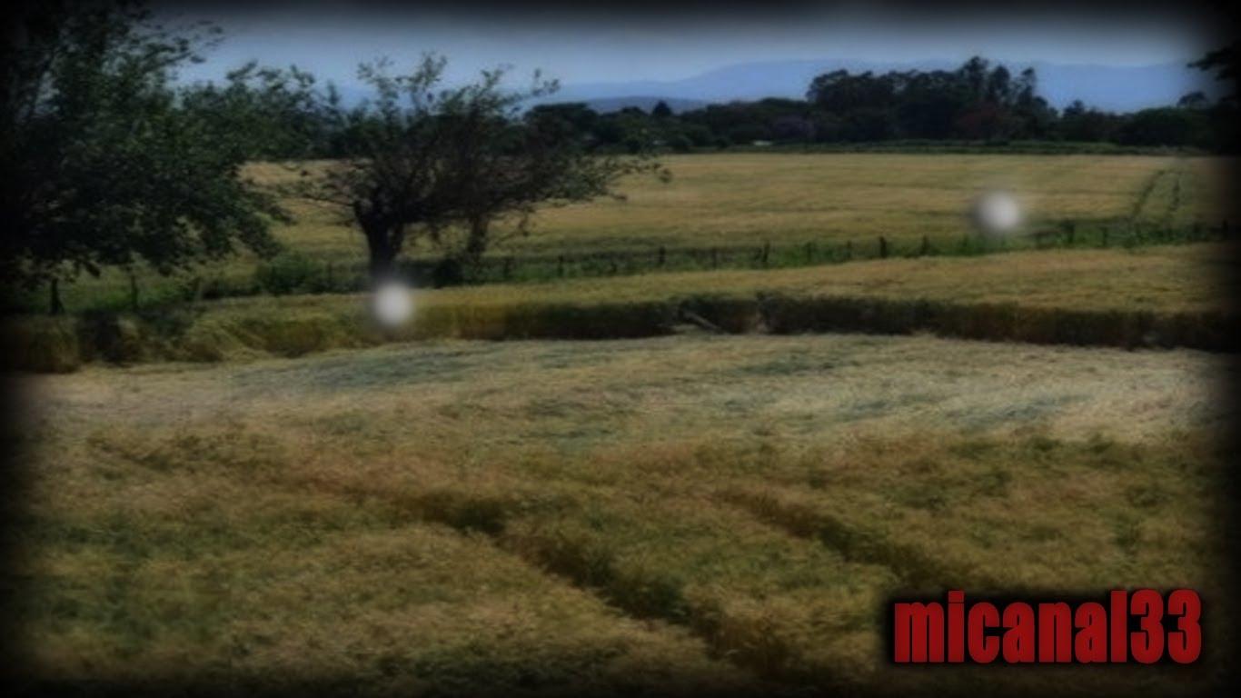 Video REAL de esferas formando figuras en campos de trigo ¿No te lo crees? Pues entra