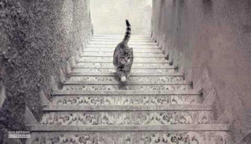 ¿El gato sube o baja las escaleras?
