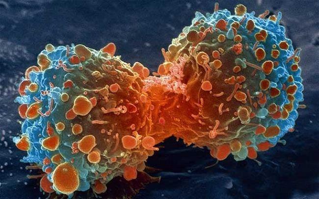 Por azar se descubre una proteína que podría combatir todos los CANCERES.