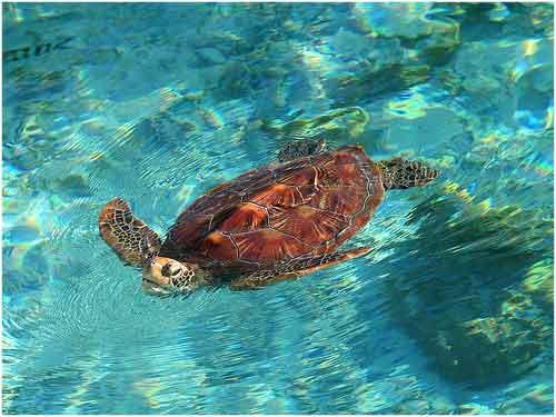 Unas 150 especies se extinguen a diario por la actividad humana.
