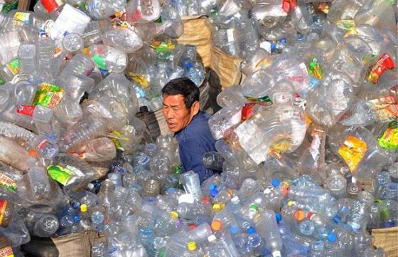 Un gusano comedor de plástico podría solucionar la crisis global de la contaminación.