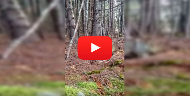 La tierra respira: el movimiento del suelo de un bosque canadiense desconcierta en las redes. (VIDEO)
