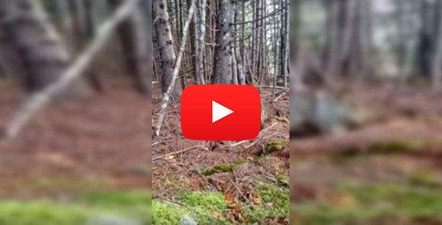 La tierra respira: el movimiento del suelo de un bosque canadiense desconcierta en las redes. (VIDEO)