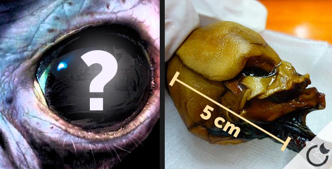 ¿Es el «SER DE ATACAMA» un VERDADERO EXTRATERRESTRE? pruebas de ADN muestran RESULTADOS IMPRESIONANTES
