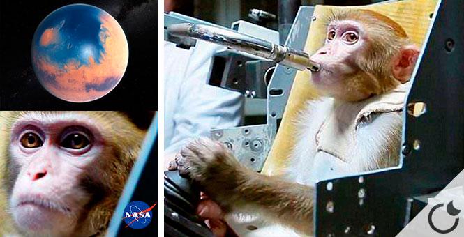 Rusia quiere enviar monos a Marte con solo billete de ida.