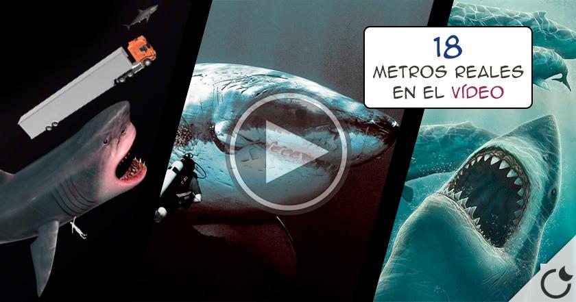 IMPACTANTE video muestra que EL MEGALODÓN sigue VIVO.¿No te lo crees? Pues ENTRA