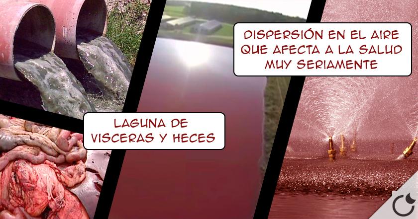 Lago de VISCERAS Y HECES. Las DISPERSAN CON ASPERSORES a tus PULMONES en una granja de CERDOS