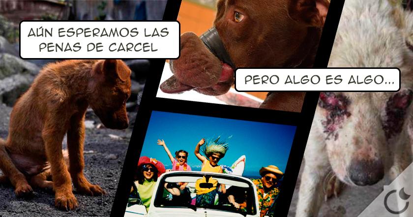 30.000 € a las ASQUEROSAS personas que ABANDONEN A UN PERRO al fín en España