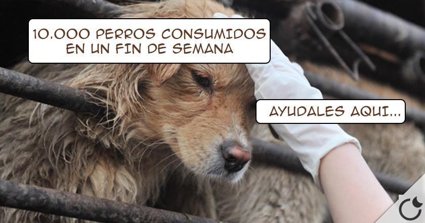 OFRECEN MILES de perros PARA COMERSELOS en el Festival de Yulin. ¡ TU puedes hacer algo AQUI !