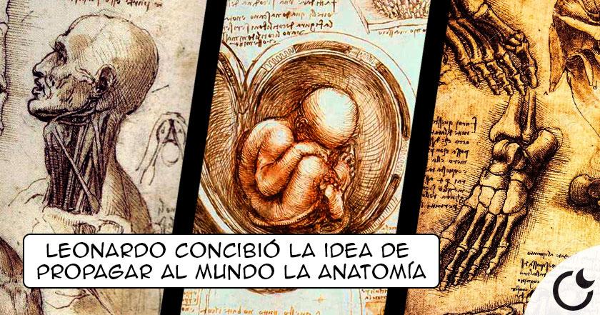Los ESTUDIOS ANATÓMICOS de Leonardo: Tan e incluso MÁS EXACTOS que la tecnología del SXXI