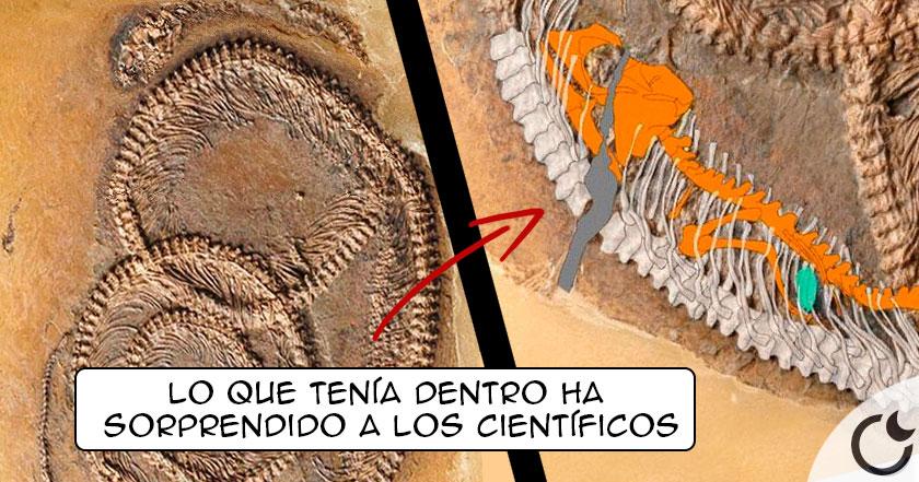 """Descubierta serpiente fosil prehistórica """"MATRIOSCA"""" de 48 MILLONES DE AÑOS"""