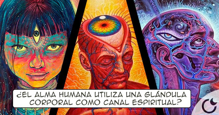 """Descubren el LUGAR DEL CEREBRO humano donde se siente a """"DIÓS"""""""