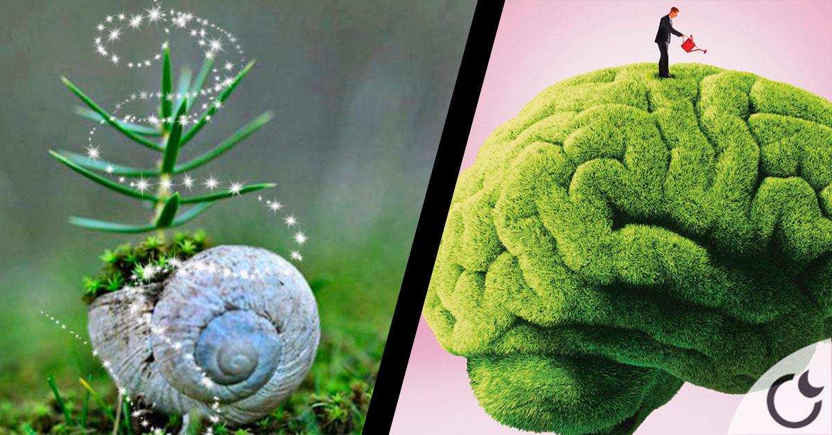 Las plantas tienen inteligencia y conciencia. Comprobado científicamente.