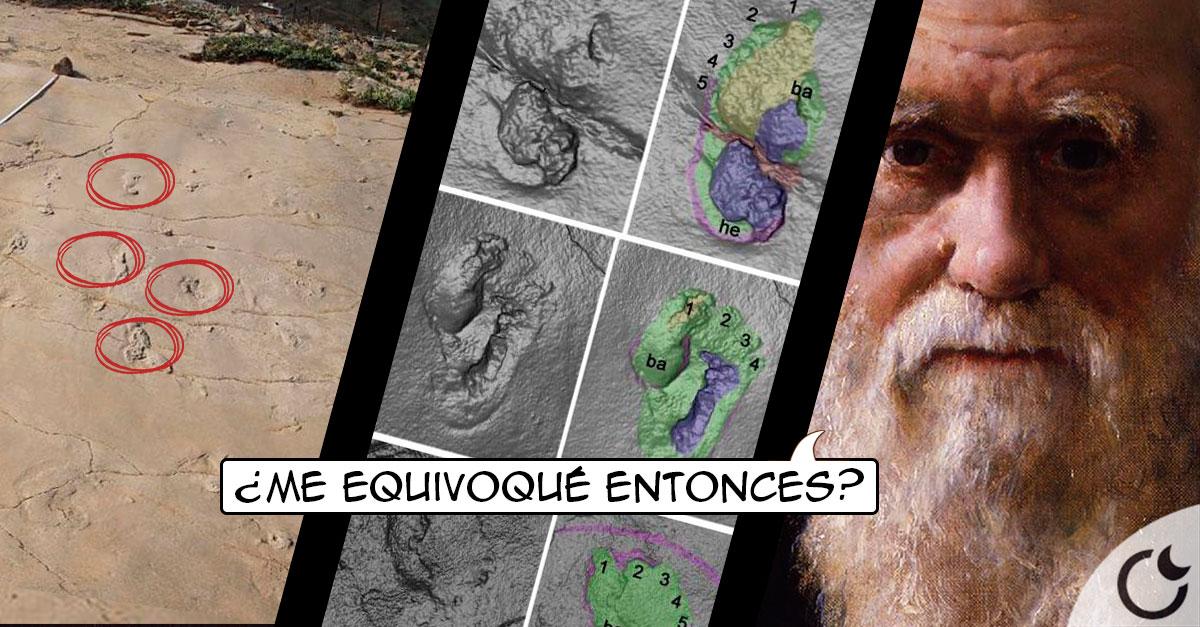 Huellas con 6 millones de años demuestran que la «Teoría de la Evolución» ESTÁ EQUIVOCADA